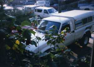 White truck and Lynn's Mustang 1997