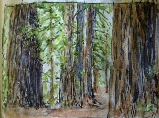 sempervirens fund watercolor